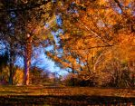 Autumn morning by CathleenTarawhiti