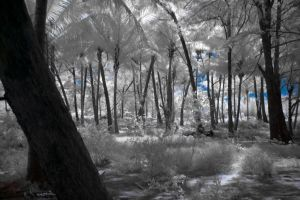 infrared palm forest by Tschisi