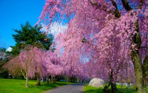 Spring in Kentucky by McAllisterBryant