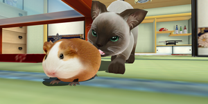 Guinea pig that is not a Hamster .: Download :. by kaahgome