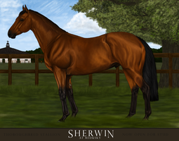SHERWIN to stud by Kimblewick