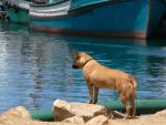 Hout Bay Hound by Yellow-Weaver