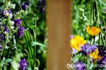 Chelsea Flower Show 2 by lonesomeaesthetic