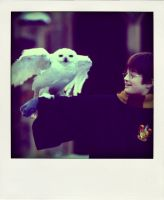 hello harry potter by x--photographygirl
