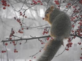 Winter.... Squirrel 3 by wearmuffin
