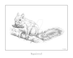Squirrel by berrijuse