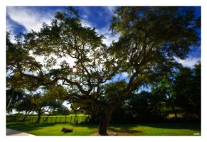 Big Tree by wolmers