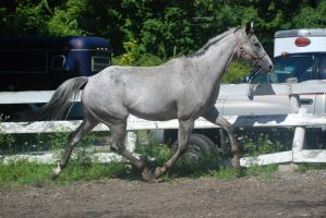 Appaloosa 71 by Spotstock