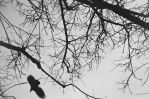 Contina - LXXX - flying with crows by Picture-Bandit