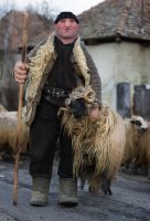 Romanian Shepherd by borda