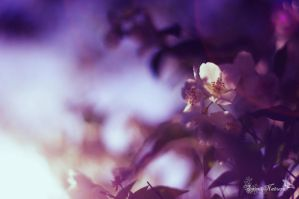 Spring sunlight I by Sweet-Nature