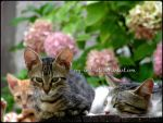 779 by evy-and-cats