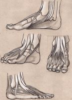 foot anatomy 2 by Lemures87