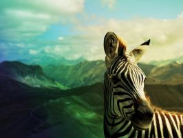 The Zebra by CoolCurry