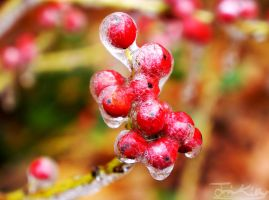 Frozen Cracked Berries by JKase911