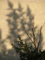 Shadows by Irridian