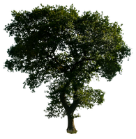 Tree 52 png by gd08