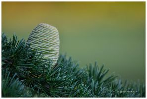 this is fir you by photom17