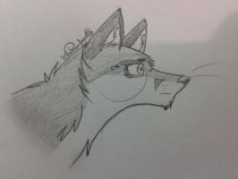 What does the Fox say by MajuFogo