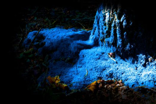 the blu in the forrest by talicaDk