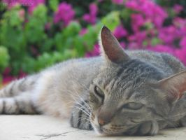 Project52.32: All the cats of Greece by mel--mel