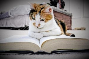 Even Cats Like A Good Book by tapestrymlp