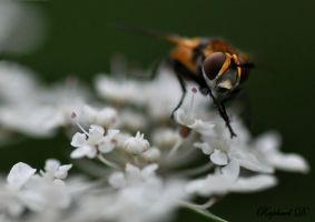 mouche by thornevald