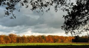 An autumnal tree line by jchanders