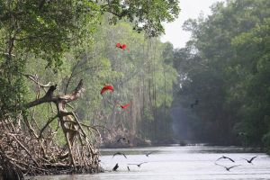 Roter Ibis by Fuchsfell