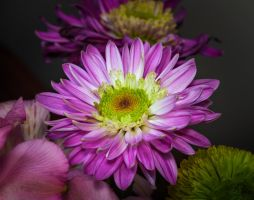 Mother's Day Flower by drhine