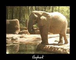 Elephant by LaughingSong