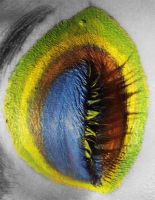 Peacock Eye II by viridis-somnio
