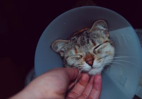 Smiling cat is sad by AnaRosaPhotography