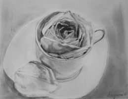 Cup of rose by amymone