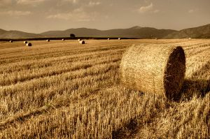 Hay Balls by NickKoutoulas