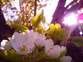 White Blooms 6 by flamingpig