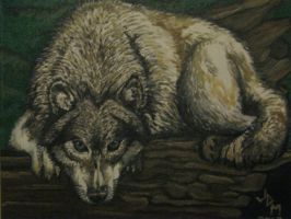 Wolf Oil Painting by jdmacleod