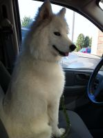 driving? what! im not driving by Meeka-The-Fire-Wolf