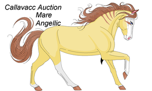Auction- Mare Purebred CLOSED by BlackWolf1112-ADOPTS