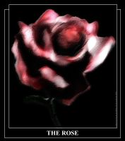The Rose by Unixer by unixer