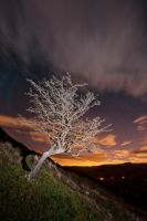 Tree by Captain-Marmote