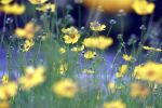 When spring is yellow. by incredi