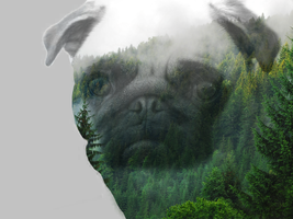 Pug in the forest by GrubyKisiel