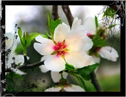Spring Miracle 2 by gors
