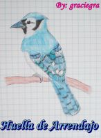 Blue Jay by graciegra