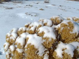HDR Shrub and Snow by dlockett17