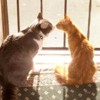 Friends at first sight by TeaPhotography