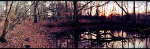 Swamp by CcPerch