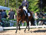 Iberian Dressage Riding Canter Stock by LuDa-Stock