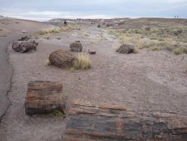 Trips to Petrified Forest NP 25 by Sting-raptor
